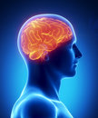 human-brain-glowing-lateral-view-20873098